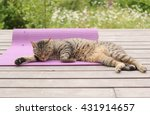 Tired Cat Sleeping On Yoga Mat...