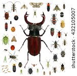 Small photo of Set of insects isolated on a white background. Beetle of Lucanus cervus (Lucanidae) and various other insects. Small versus big size (parameter) of insects concept