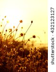 grass flower field on light   Shutterstock . vector #432123127