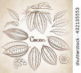 graphic cocoa fruit collection... | Shutterstock .eps vector #432135553