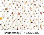 Colorful And Variety Seashells...