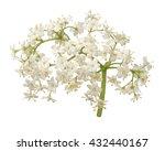 Stock photo elder flower blossoms 432440167