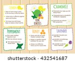 tea infographic. herbal tea ... | Shutterstock .eps vector #432541687