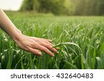 field  nature with hand or palm.... | Shutterstock . vector #432640483