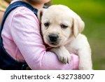 Girl Holding A Puppy Labrador....