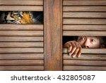 Siberian Tiger And Human Eye I...