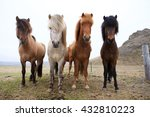 Beautiful Icelandic Horses In...
