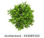 green tree isolated white... | Shutterstock . vector #433089103