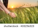 womans hands in a wheat field... | Shutterstock . vector #433256323
