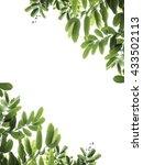 green leaf frame on white... | Shutterstock . vector #433502113