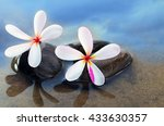 frangipani   plumeria flower on ... | Shutterstock . vector #433630357