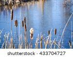 Dried Cattails On Lakeside In...