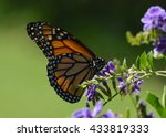 Monarch Butterfly In Butterfly...