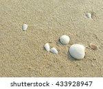 shells on the beach | Shutterstock . vector #433928947