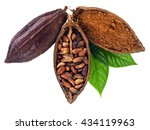 Cacao Pods And Beans And Powde...
