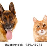 Stock photo cat and dog together isolated on white 434149273