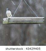 Tufted Titmouse Bird Sitting O...