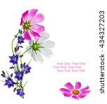 Cosmos Flowers Isolated On...