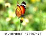 blur shot of butterfly on grass
