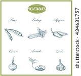 vegetables sketch set | Shutterstock . vector #434631757