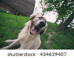 funny dog  wide angle lens  | Shutterstock . vector #434639407