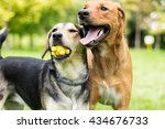 Stock photo play with us 434676733