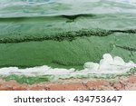 Small photo of Plankton bloom,Algae Bloom change A lake to be green.