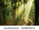 Green Landscape With Sun Rays...