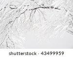frosty tree in winter | Shutterstock . vector #43499959
