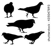 pigeons silhouette  isolated | Shutterstock .eps vector #435047893