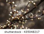Small photo of spring blooming white sakura cherry flowers with bokeh.Spring Blossom tree.Sakura branch and flowers blooming blossom outside.Abiogenesis at spring. A symbol of youth, beauty,hope and updates.