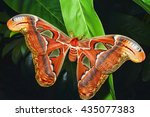 beautiful big butterfly  giant... | Shutterstock . vector #435077383