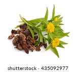 Small photo of Rhodiola rosea (commonly golden root, rose root, roseroot, western roseroot, Aaron's rod, Arctic root, king's crown, lignum rhodium, orpin rose). Roots with flowers. Isolated on white background.