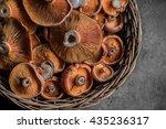 saffron milk cap or red pine... | Shutterstock . vector #435236317