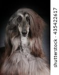 Small photo of Beautiful Afghan dog on dark background, closeup portrait