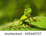 Green lizard. Beautiful animal in the nature habitat. Lizard from forest. Green Garden Lizard, Calotes calotes, detail eye portrait exotic tropic animal in green nature habitat, Sinharaja, Sri Lanka