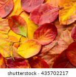 colorful autumn leaves... | Shutterstock . vector #435702217