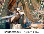 Brown Pelican On A Post...