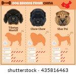 dogs breed vector infographics...   Shutterstock .eps vector #435816463