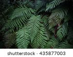A Fern In Rain Forest Near...