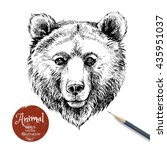 hand drawn brown bear animal... | Shutterstock .eps vector #435951037