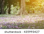 selective focus tree in the... | Shutterstock . vector #435993427