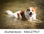 Dog Lying In Water