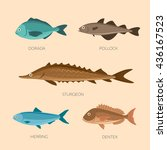 set of sea fish  sea trout ... | Shutterstock .eps vector #436167523