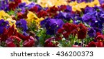 Wave Of Colored Flowers. Shot...