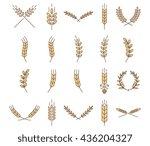 stylish vector wheat... | Shutterstock .eps vector #436204327