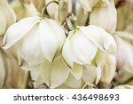 Background Of Hesperoyucca...