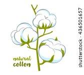 cotton brunch on white... | Shutterstock .eps vector #436501657