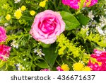Pink Rose Flower Plant With...