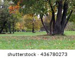 park landscape lonely tree | Shutterstock . vector #436780273